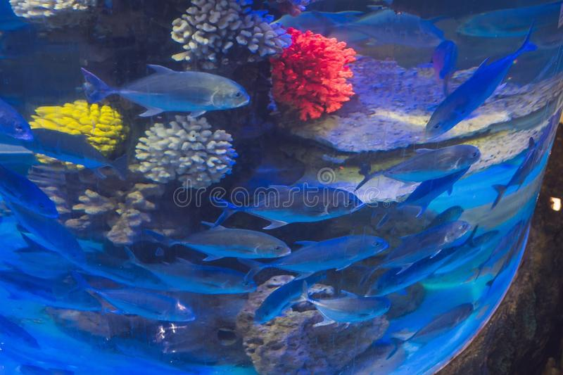 Many fish in a round aquarium swim.  royalty free stock images