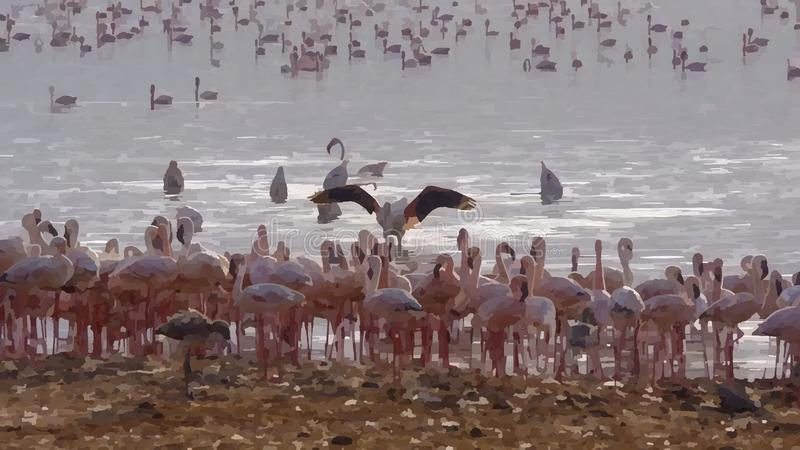 Many flamingos bathe in the sea. Many flamingos bathe in the ocean royalty free stock image