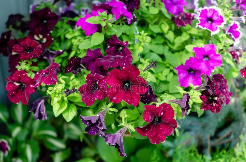 Many flowers different colors in summer royalty free stock photo