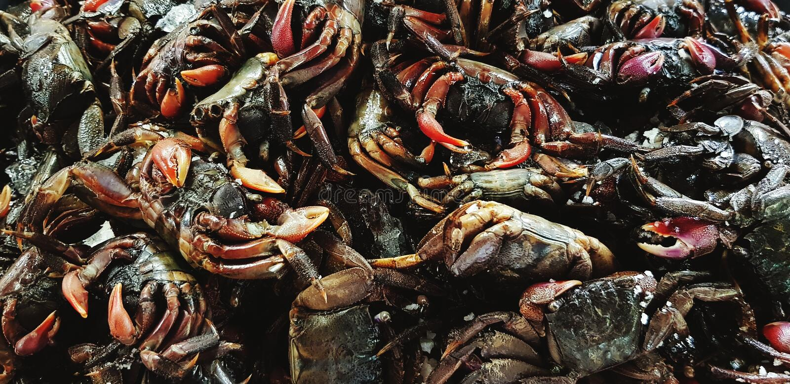 Many fresh black small salted crab for cooking food and sale in seafood market royalty free stock photography