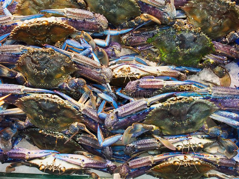 Uncooked Blue Swimmer Crabs, Sydney Fish markets, Australia. Many fresh blue swimmer crabs for sale at the Sydney Fish Markets, Pyrmont, Sydney, NSW, Australia royalty free stock photo