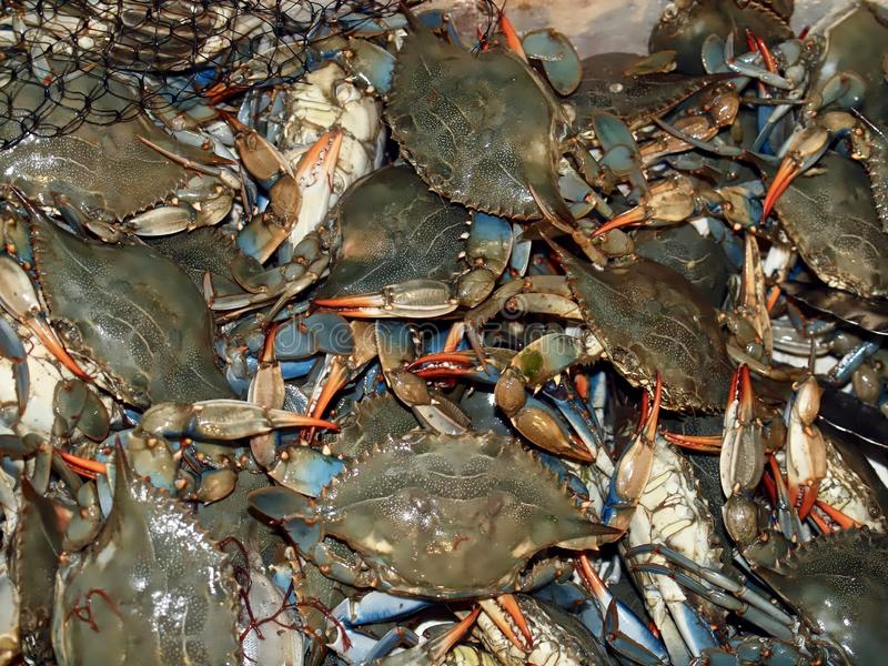 Macro of fresh crustaceans. Many fresh crustaceans at a fish market royalty free stock photography