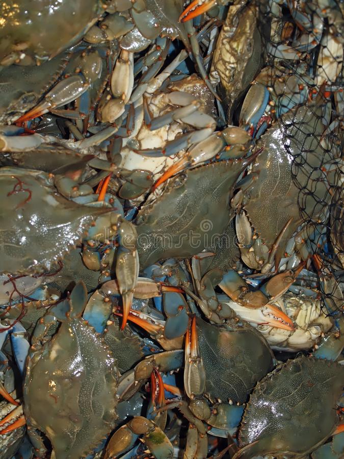 Macro of fresh crustaceans. Many fresh crustaceans at a fish market royalty free stock photos