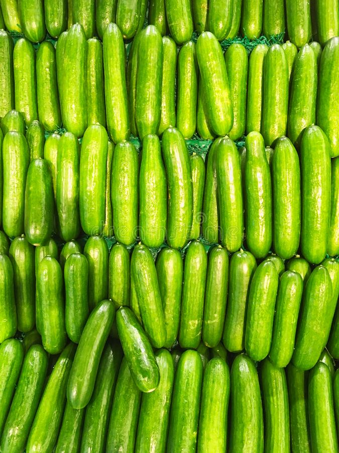 Many Fresh Lebanese Cucumbers For Sale in Shop. A green pattern of many fresh Lebanese cucumbers for sale in a fresh fruit and vegetable shop. A visual metaphor stock images