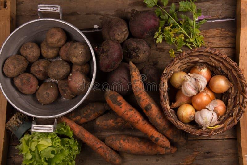 Many of fresh vegetables stock image