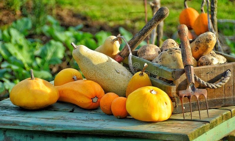 Many fruits and vegetables are for condiments. Such as tomatoes, pumpkins, pumpkins, carrots royalty free stock photos
