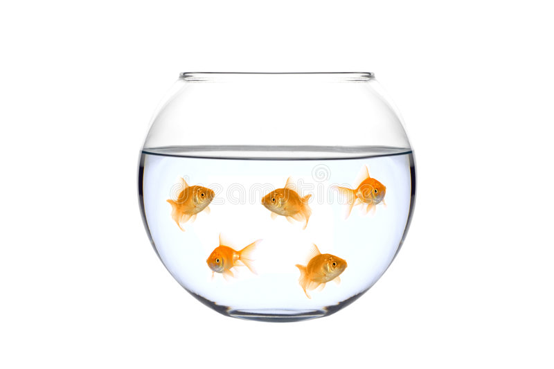 Many golden fish in a bowl stock images