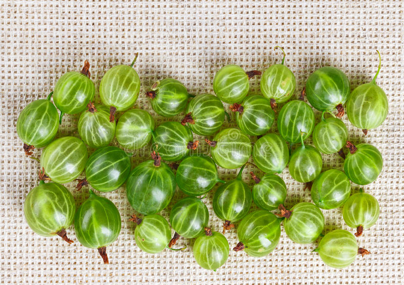Download Many Gooseberry Fruits On Gray Linen Stock Photo - Image: 28644060
