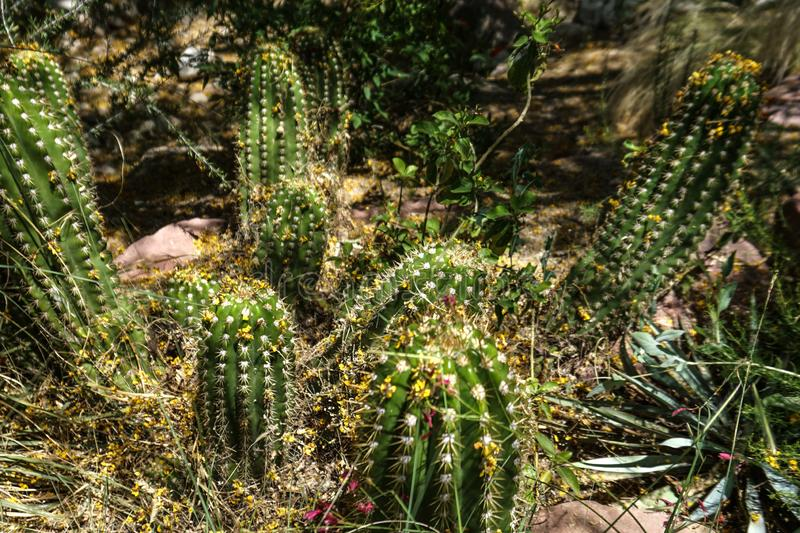Many green cactus type plants royalty free stock photography