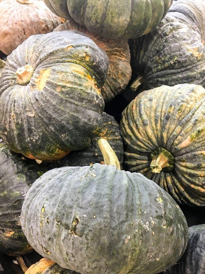 Many Green pumpkin royalty free stock photos