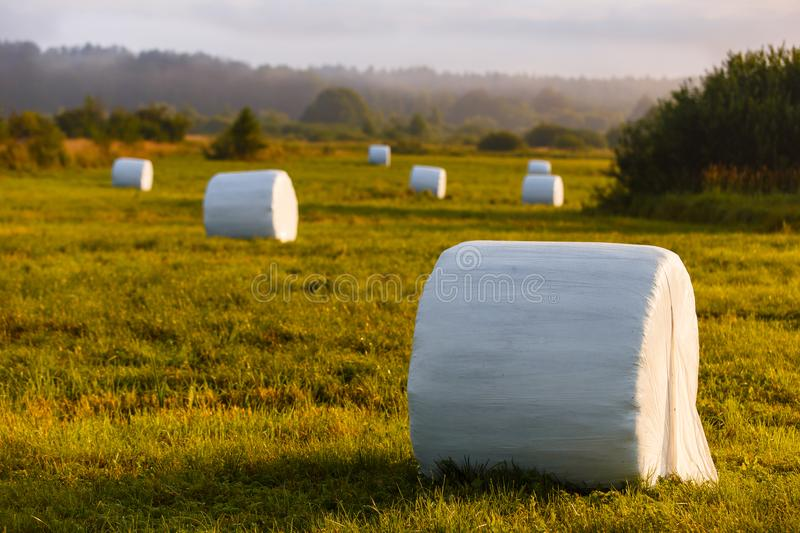 Haystacks for livestock packed in white plastic in the field. Many haystacks for livestock packed in white plastic in the field royalty free stock photography