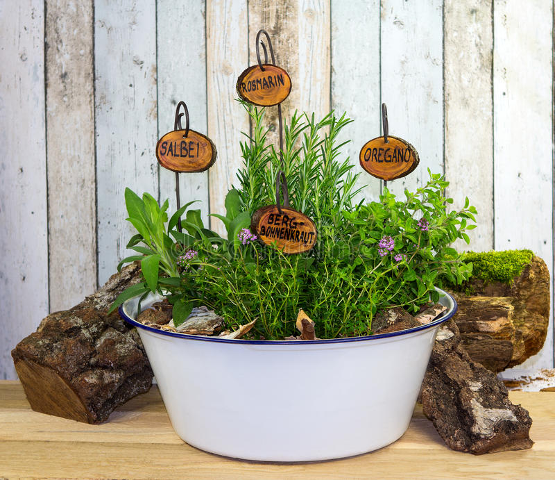 Many herbs in an old wash bowl. stock images