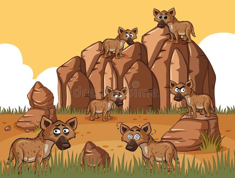 Many hyenas in the field. Illustration vector illustration