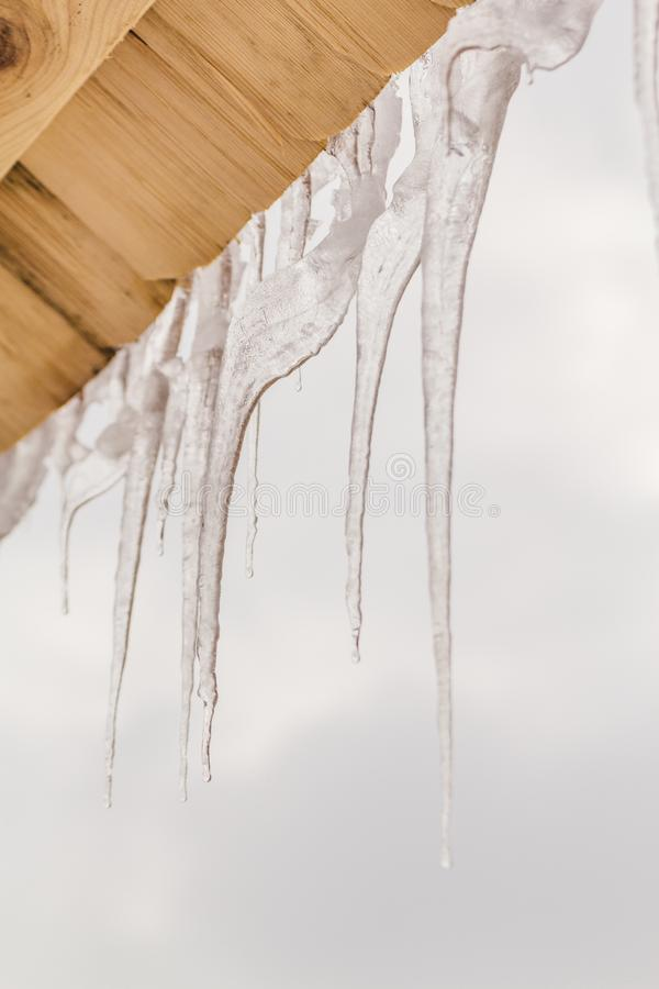 Many icicles melt on the wooden roof with water drops. Spring is comming. Many beautiful icicles melt on the wooden roof at the end of winter and water drops royalty free stock photography