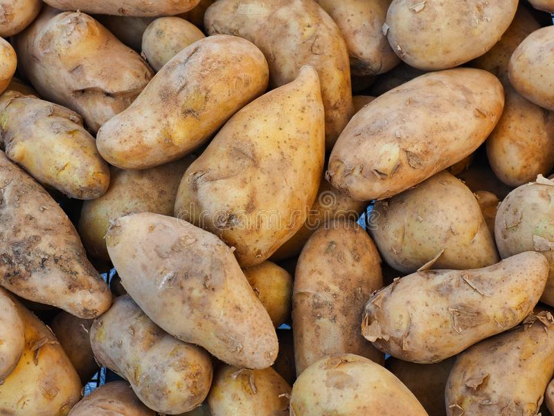 Many Irregular Shaped Potatoes For Sale at Fruit and Vegetable market. Many loose freshly dug or harvested irregular shaped potatoes for sale at a fresh fruit royalty free stock photography