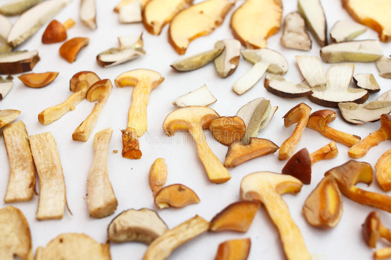 Many kinds of forest mushrooms. Many kinds of forest mushrooms drying royalty free stock photo