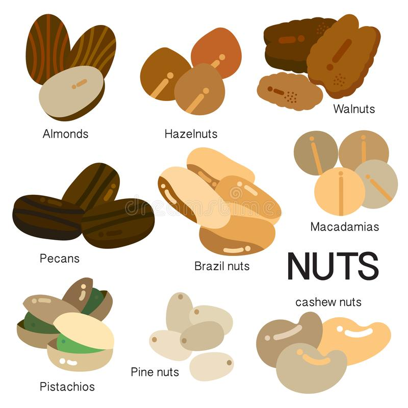 MANY KINDS OF NUTS royalty free illustration