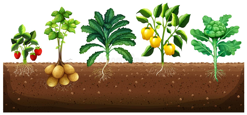 Many kinds of vegetables planting on ground. Illustration royalty free illustration