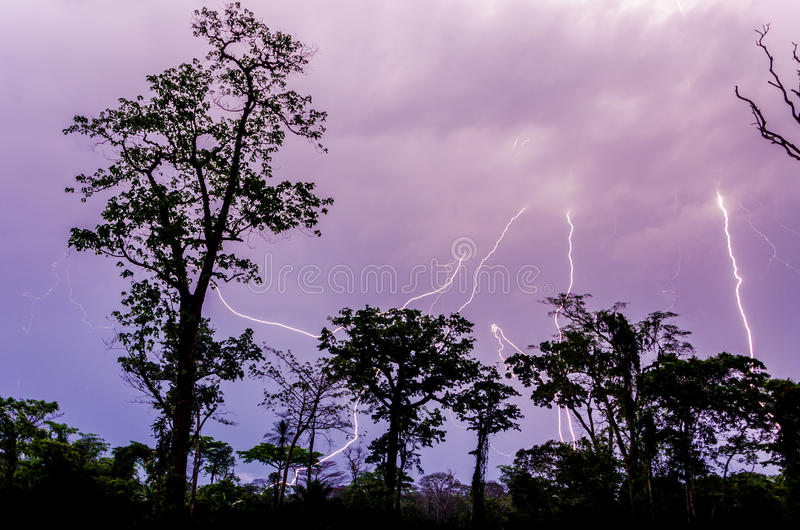Many lightning strikes during dramatic thunderstorm with rain forest tree silhouettes in foreground, Cameroon, Africa stock image