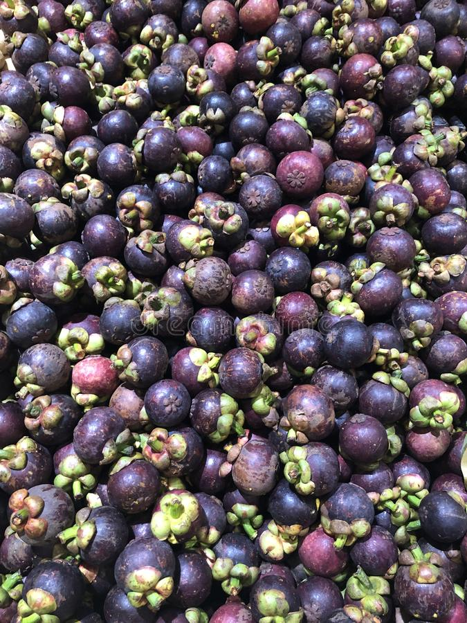 Many mangosteen for sale royalty free stock photos