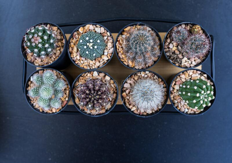 Many mini cactus in block plants for decoration and hobby stock photography