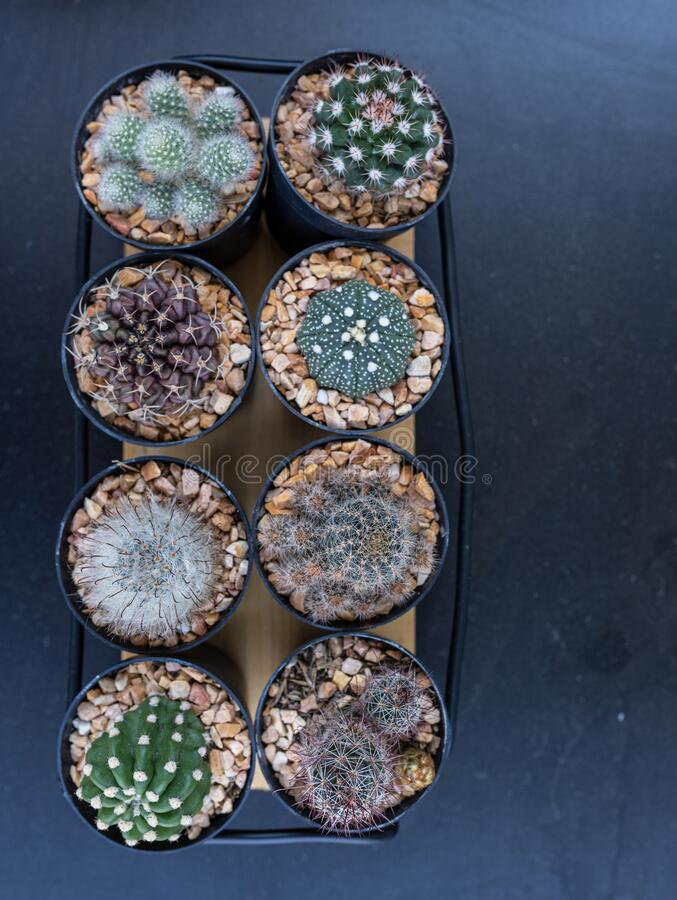 Many mini cactus in block plants for decoration and hobby stock photo
