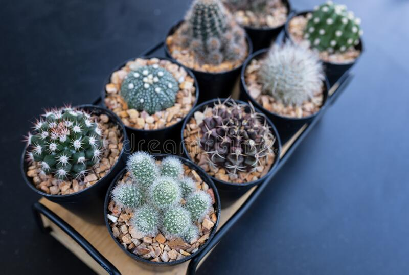 Many mini cactus in block plants for decoration and hobby royalty free stock image