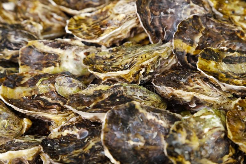 Mollusks at the market. Many mollusks are arranged side by side royalty free stock images