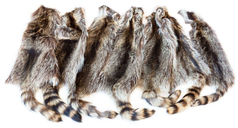 Many natural raccoon pelts royalty free stock photography