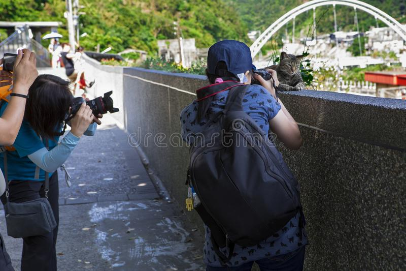 Many people focus on taking pictures, grab the cat funny picture. Taiwan`s famous tourist attractions, cat monk Ruifang Monkey Cave, tourists are taking pictures royalty free stock photo