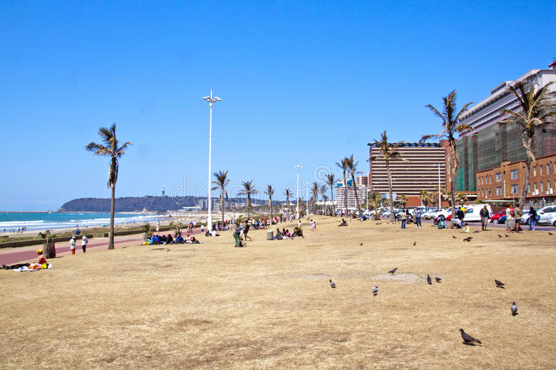 Many People and Pidgeons on Grass Verge on Beachfront. DURBAN, SOUTH AFRICA - SEPTEMBER 21, 2014: Many unknown people and pidgeons relax on grass verge on royalty free stock photography