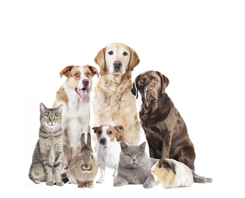 Many pets in front of white background stock photos