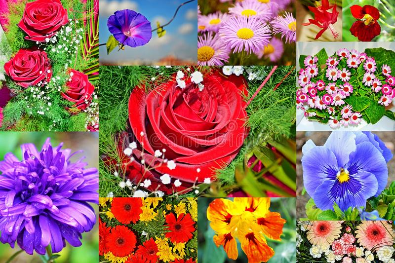 Colorful flowers collage postcard royalty free stock image