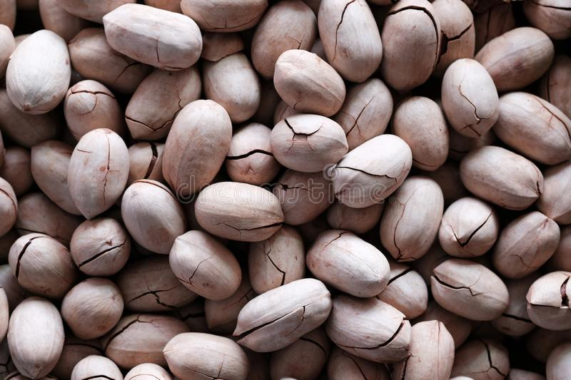 Many pile of white inshell pecan nuts with cracks with soft light royalty free stock images