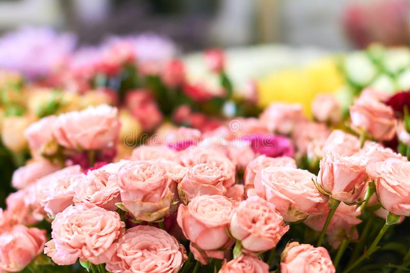Many pin roses are being sold in the flower shop royalty free stock photo