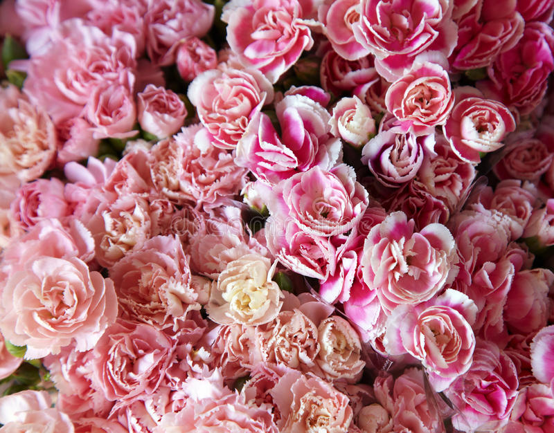 Many pink flower. In thai market royalty free stock photos