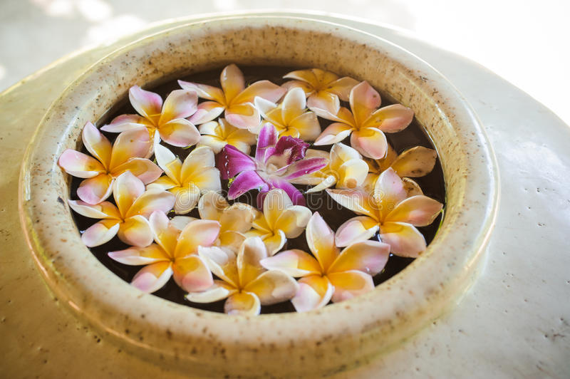 Many pink and white frangipani with purple orchid flowers in the water. Vase stock image