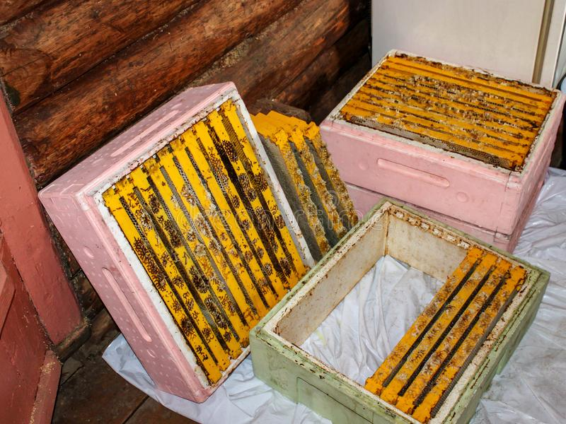 Many plastic frames for honeycombs full of honey. Plastic frames lie in store cases of hives made of expanded polystyrene royalty free stock photos