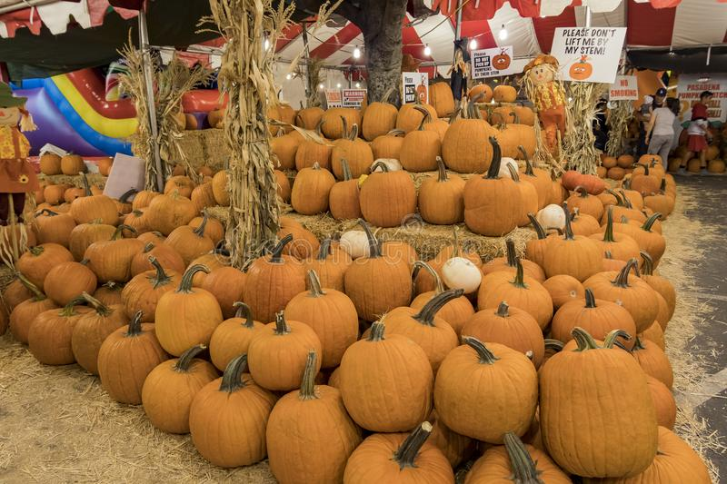 Many Pumpkins selling at a pumpkin patch royalty free stock photography