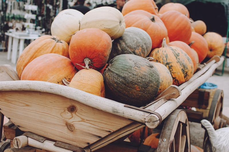 Many pumpkins in wooden cart. Various pumpkins background. Harvest, Halloween or Thanksgiving day concept stock images