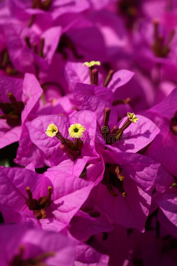 Free Many Purple Flowers Blurred Background Stock Image - 184365101