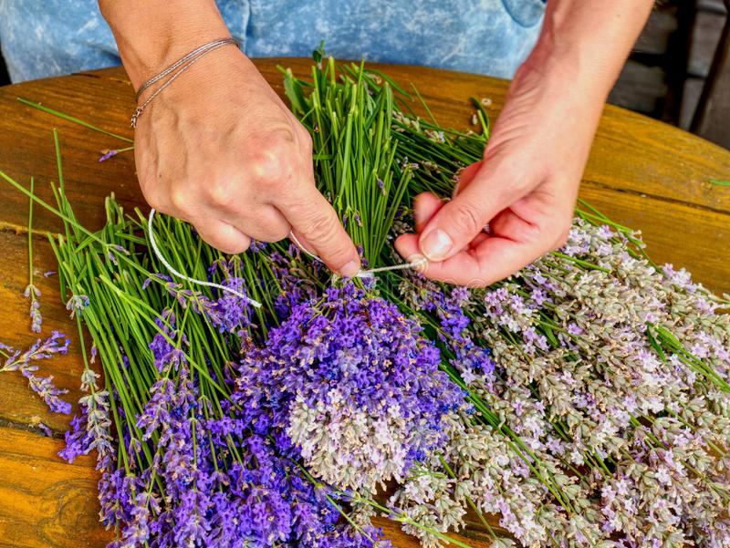 Many Purple levander flower on old wooden table. Beautiful lavender flower from my flower garden, vivid, violet, smell, sequim, plant, perfume, nature, natural stock photos