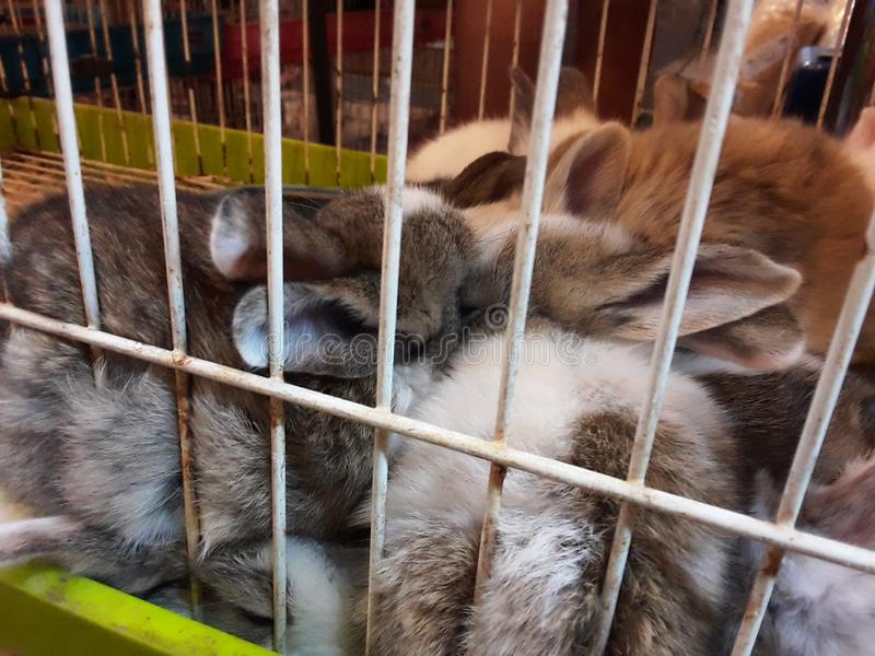 Many rabbits at the annual event  animal royalty free stock photo