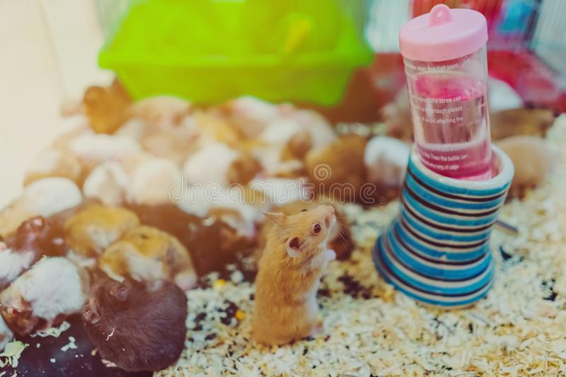Many rats are sleeping, resting and eating. In cages royalty free stock images