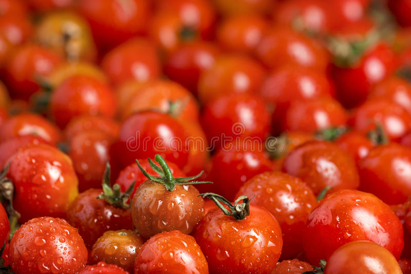 Many red cherry tomatoes royalty free stock photography