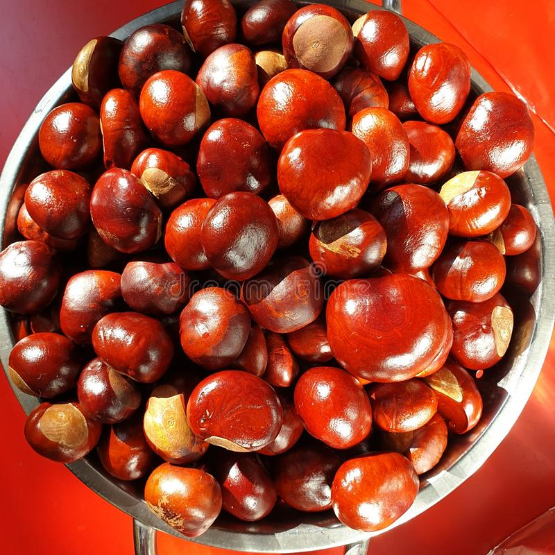 Many Red Chestnuts on isolated red background. Castanea. stock image