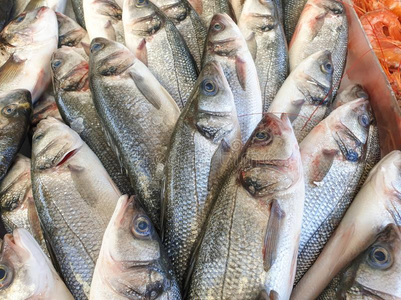 Sea bass fish on ice. Many sea bass fish on ice for sale, Fish local market stall with fresh seafood,view from top royalty free stock images