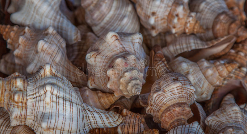 Many shells. Many sea shells in a basket royalty free stock photography