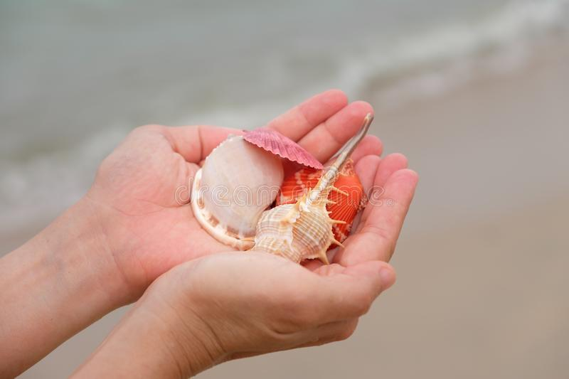 Many shells on woman`s hands stock images
