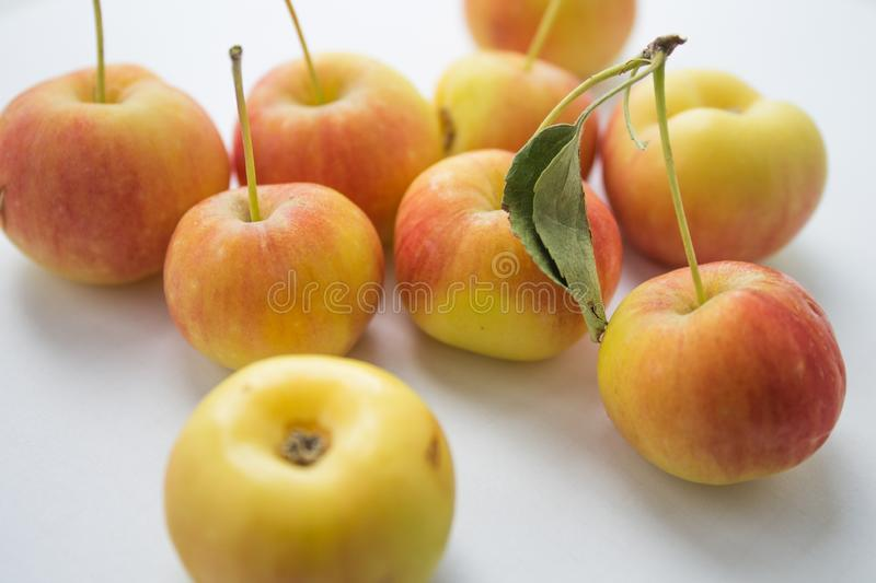 Many small apples in hand. Ripe harvest royalty free stock photos